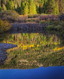 Reflection Below the Beaver Dam Royalty Free Stock Photography