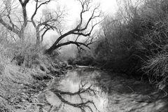 Reflection. Black and gray shot of a spooky muddy stream Royalty Free Stock Photography