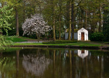 Reflection of blooming magnolia tree in the park. Reflection of blooming magnolia soulangeana and little house in the belgian park in springtime Royalty Free Stock Images