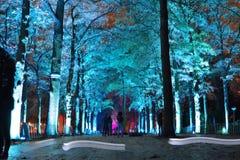 Reflection, blue lightened trees Stock Photos