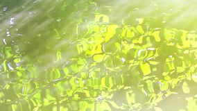 Reflection of the branches on the lake surface stock video footage