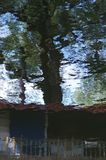 Reflection of branches and trunk tree in water. stock image