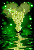 Reflection of a bunch of grapes in water. On glowing background Royalty Free Stock Image