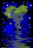 Reflection of a bunch of grapes in water. On glowing background Stock Image