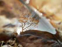 Reflection. Close up reflection of water on dried leaves. Selective focus Stock Photos