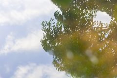 The reflection of clound and sky with tree. On the surface of the water Stock Image