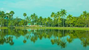 Reflection of coconut palm trees in decorative pond Royalty Free Stock Images