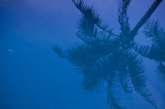 Reflection of Coconut tree. In blue swimming pool Royalty Free Stock Photo