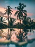 reflection of coconut tree after the rain. royalty free stock image
