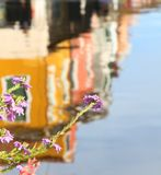Reflection of colored houses of Burano island and flowers Stock Photos