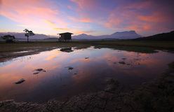 Reflection of colorful sunrise with Mount Kinabalu at the background. In a paddy field at Kota Belud, Sabah, East Malaysia, Borneo Stock Photo