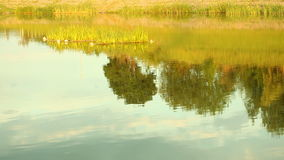 Reflection of countryside in lake water. Outdoor. stock footage