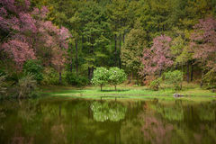 Reflection of couple tree in the lake Stock Image
