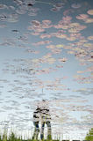 Reflection of couple in water lilies pond Stock Photo