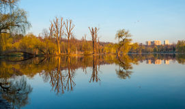 Reflection of cuted trees stock images