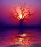 Reflection of dawn. Tree taken at dawn and manipulated for effect Royalty Free Stock Photo
