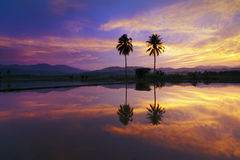 Reflection of dramatic sunset colors at a rural area in Sabah, Borneo Stock Images