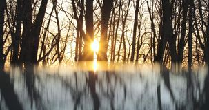 Reflection of dry trees in the evening against the background of the sun.  stock video