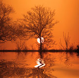 Reflection of Dusk. Tree with the sun going down and a manipulated reflection added Stock Photography