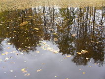 Reflection of a fall leaf. Reflection of the sky and trees Everything is reflected in the water Leaden clouds hang over the lake Leaves float on a mirror surface Stock Photo