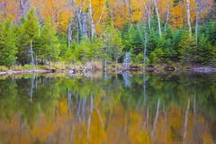 The reflection of the fall Stock Images