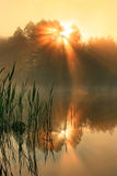 Reflection of the first rays of the sun. In a misty forest lake Stock Image