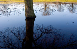 Reflection on flooded meadow Royalty Free Stock Photo