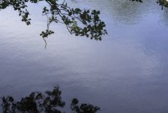 Reflection foliage. Blue water lake sunny summer day Royalty Free Stock Images