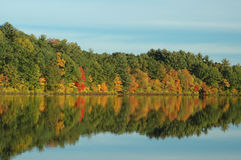 Reflection of Foliage on a Quiet Pond Stock Images