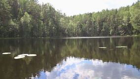 Reflection of forest in lake Royalty Free Stock Photography