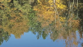 Reflection of forest in the lake stock video footage