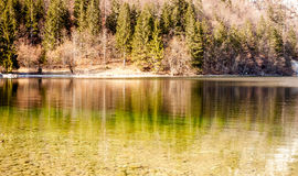 Reflection of forest in the lake surface Royalty Free Stock Photos
