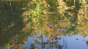 Reflection of forest in lake surface stock video footage