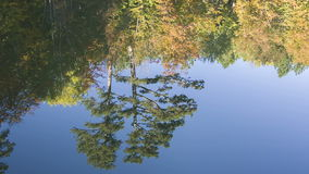Reflection of forest in lake surface stock video