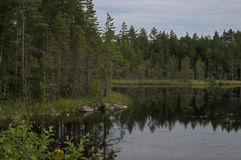 Reflection of a forest Royalty Free Stock Photography