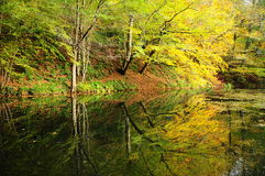 Reflection of forest on lake Royalty Free Stock Photography