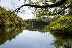 Reflection of the forest over the lake`s water at Plitvice lake Royalty Free Stock Image