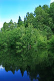 Reflection of the forest in the pond Royalty Free Stock Photo