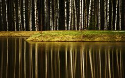 The reflection of the forest in the water. royalty free stock photos