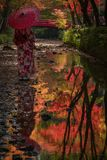 Reflection of geisha and colorful trees stock images