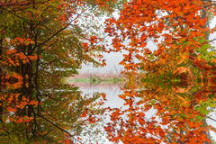 Reflection of the golden autumn forest Royalty Free Stock Images