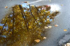 Reflection of golden autumn leaves in Boise Greenbelt puddle stock photography