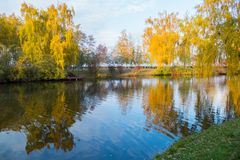 Reflection of golden birch leaves in the water of a lake in a park under a blue sky. For your design Royalty Free Stock Images