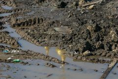 Reflection of the golden dome of the church in a puddle on a construction site. 2010.04.11, Moscow, Russia. Reflection of the golden dome of the church in a stock photo