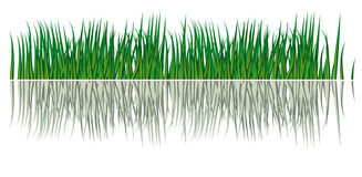 Reflection of grass in the water Royalty Free Stock Photos