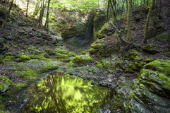 Reflection in green forest Stock Photo