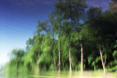 Reflection of green trees in the blue water. Reflection of green trees with white trunks in blue water. Circles on the water. Bright background image Stock Images