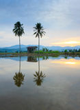Reflection of hills, a hut and coconut trees Stock Image