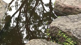 Reflection of a Japanese Maple tree, in the pond of a landscaped Japanese garden in Australia. This pond, and the surrounding garden, got built for Japan`s stock video footage