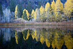 Reflection at June lake Eastern Sierra California on fall evening. royalty free stock photo